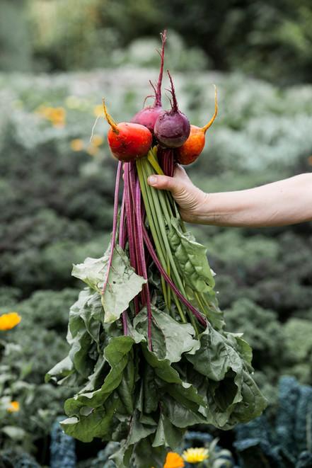 Grønnsaker_hovelsrud_1 WEB.jpg