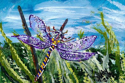 Dragonfly Aspiration