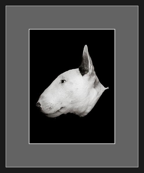 Bull Terrier #2
