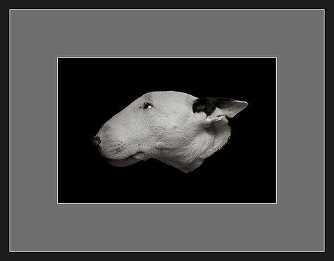Bull Terrier #1