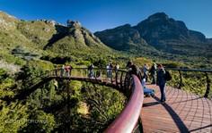 Kirstenbosch Garden - Boomslung Bridge