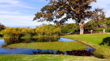Picnic Spot - Kirstenbosch - Pond - Animals