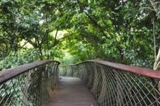 Boomslung Tree Top Walk
