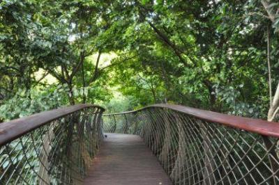 Kirstenbosch - Boomslang Bridge