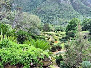 Kirstenbosch Botanical Gardens Cape Town South Africa