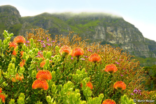 Kirstenbosch - Fauna and Flora
