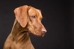 dog-3277417_1920.jpg