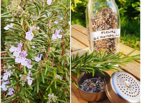 Infusion de fleurs de romarin et médecine chinoise