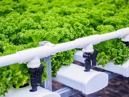 Getting the most from Hydroponics