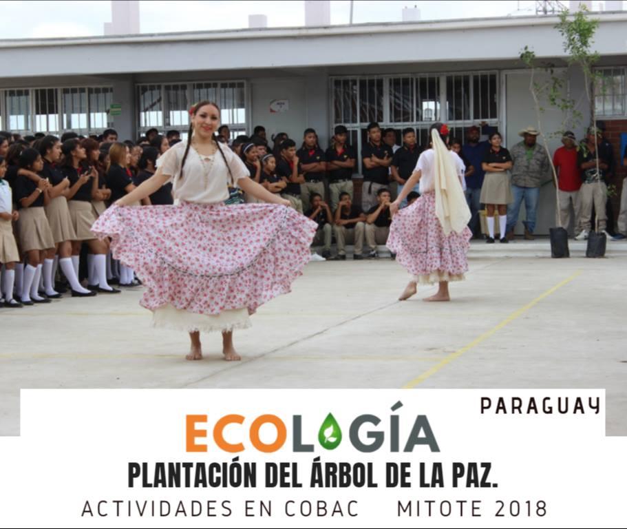 PLANTACIÓNÁRBOL-2