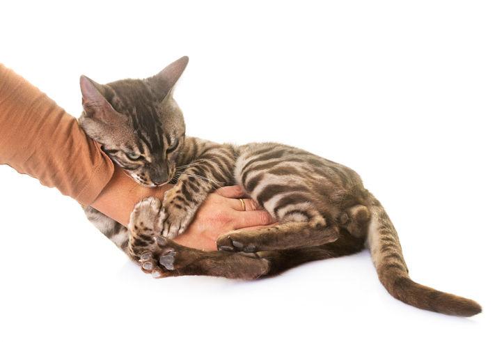 Cat Behaviour Consultations