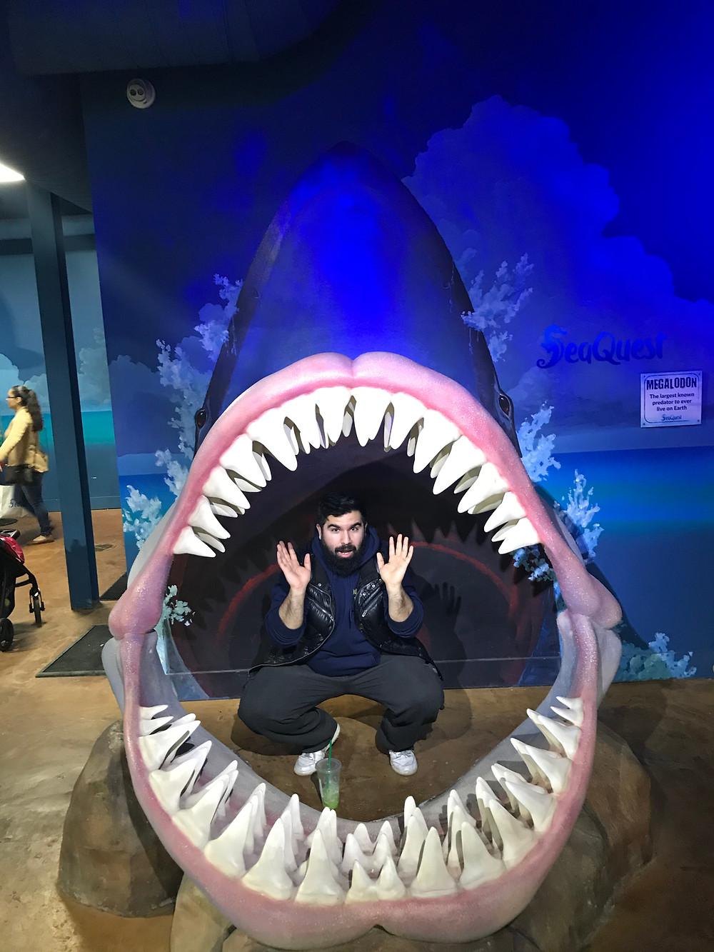 shark, bite, man, shark teeth, shark jaw,