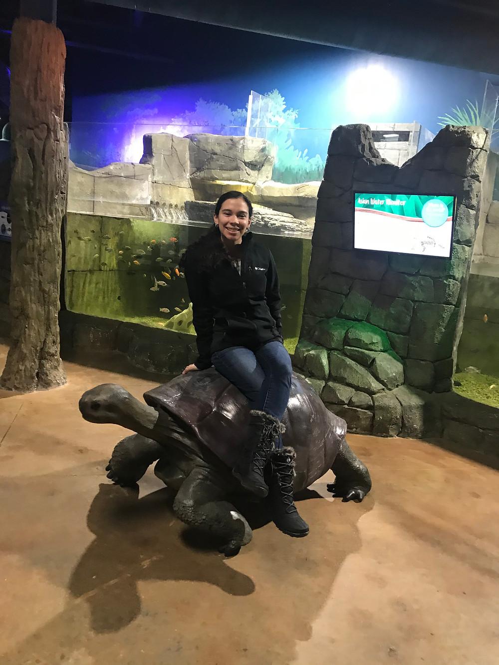 turtle, ride, slow,