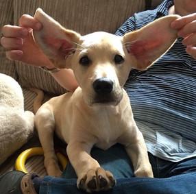 Puppy Bale