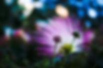 olesya-blinskaya-ghN-p1Sm7ME-unsplash.jp