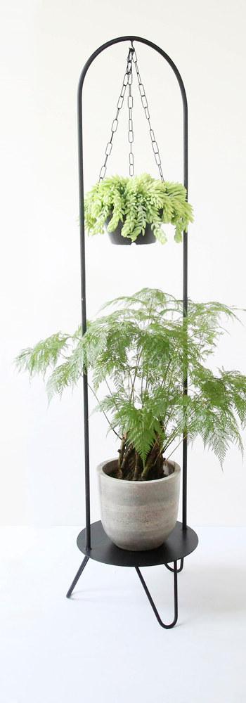 Pé de Planta N6