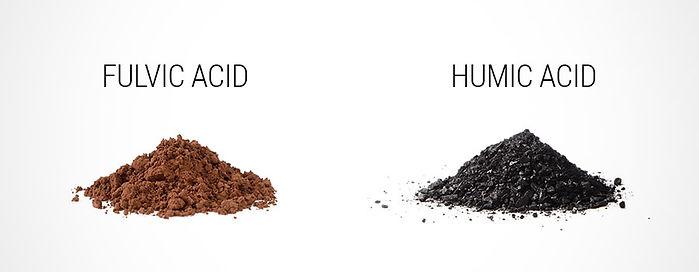 Inner-Acids.jpg
