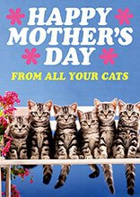from all your Cats