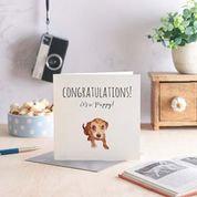 Congratulations.New Puppy