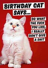This Cat Says