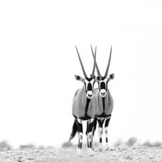 oryx twins