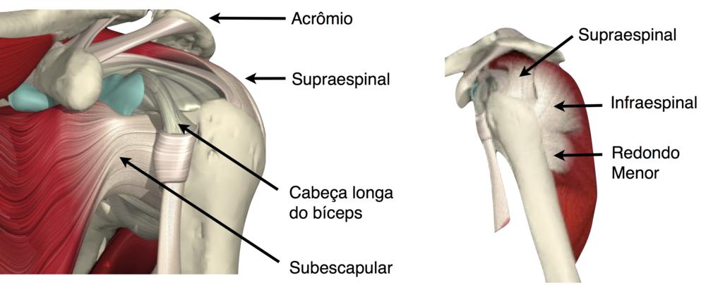 reabilitação ombro pilates