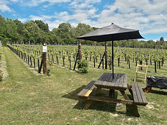 Picnic at Wildwood Vineyard