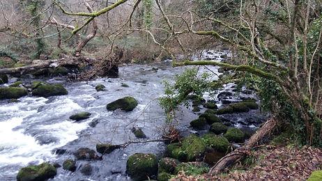 Rivers Song Woodlands10.jpg