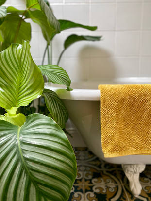 calathea's and roll top.