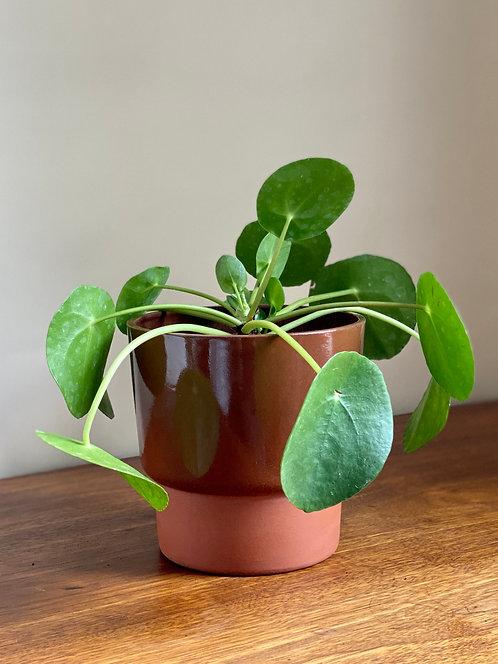 terracotta two tone planter.