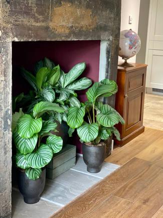 leafy fireplace.