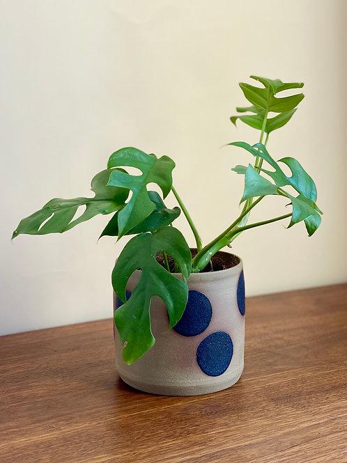 dotty ceramic pot 12cm.