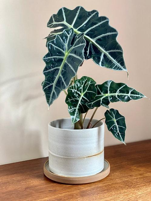 handmade landscape plant pot 16cm.