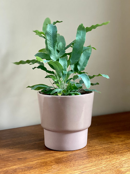 dusty pink two tone planter.