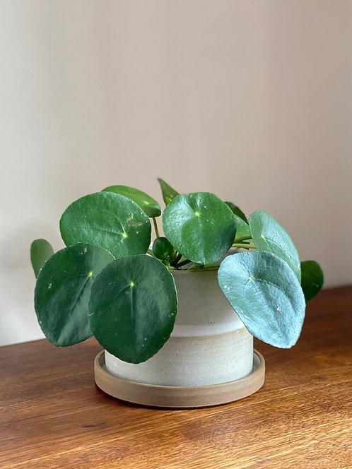 handmade landscape plant pot 13cm.