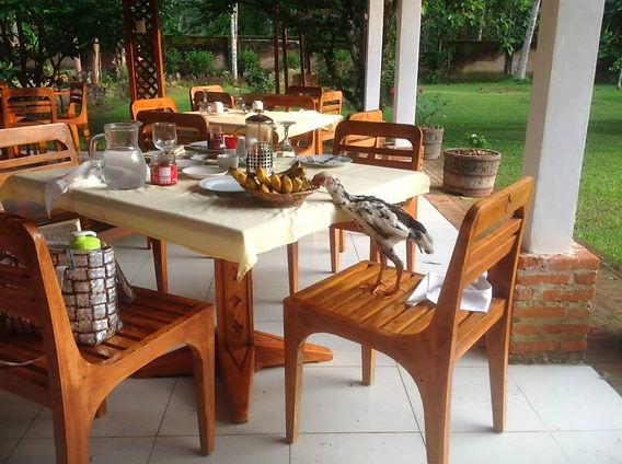 Breakfast at Satwa Eco-lodge.jpg