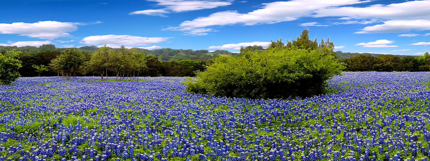 Why we love springtime in Texas