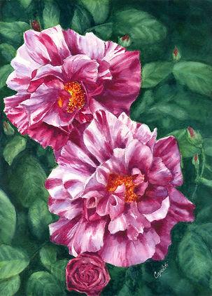 Pink Roses (2).jpg