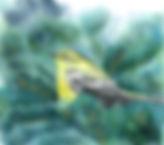 yellow bird fir tree resized 833.jpg