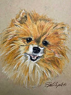 Pomeranian charcoal drawing dog pets