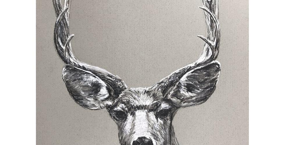 deer elk charcoal drawing nature wildlife hunting season