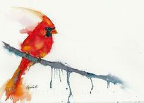 Winter Cardinal trimmed.jpg