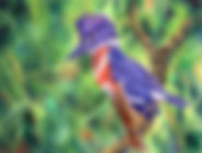 purple kingfisher resized 833.jpg