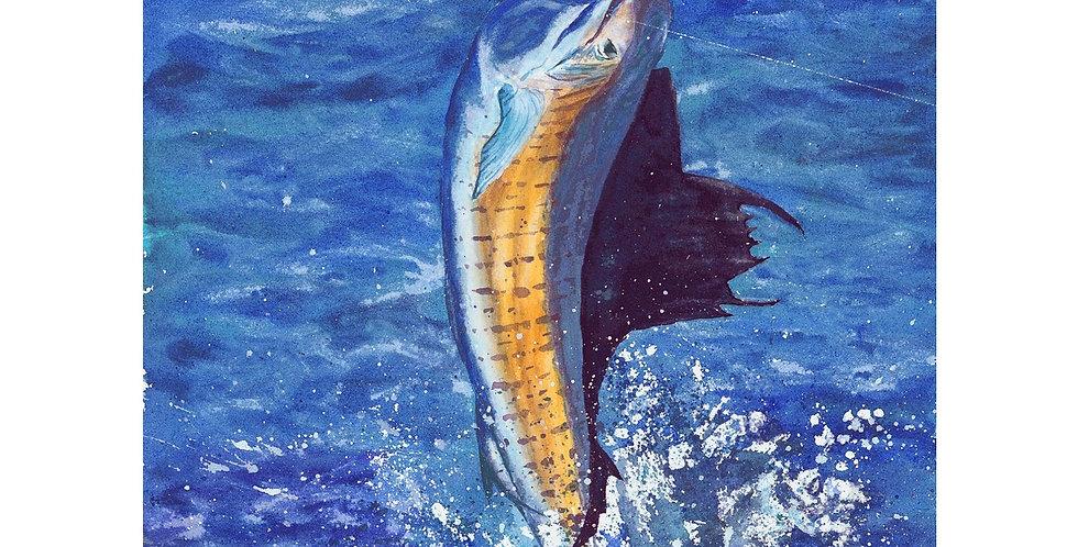 Majestic Sailfish