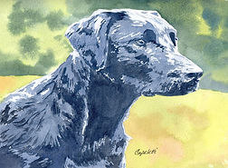 labrador dog hunting pets