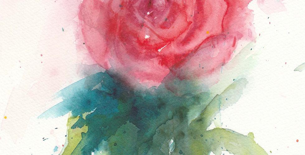 Pink Garden Rose