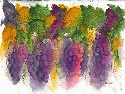 Grapevine wine grapes fall autumn leaves