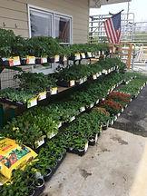 Bonnie vegetable garden seed plants