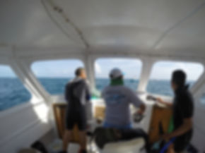 Whale Shark Snorkel Mexico Playa del Carmn Tulum Cancun Riviera Maya
