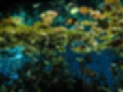 Cenote Dive Playa del Carmen, Mexico